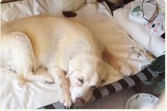 Dog using Magnetic Pulser
