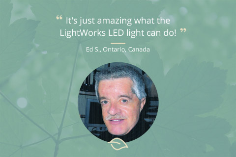 Customer Comment – LightWorks